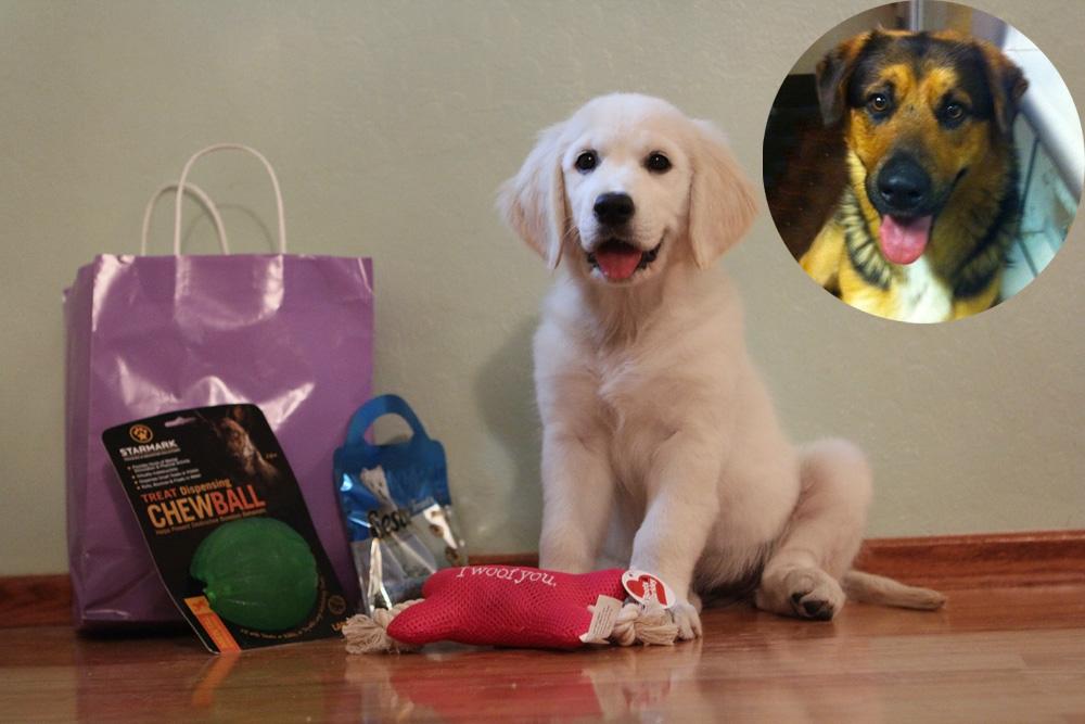 Dog toys for Ellvy