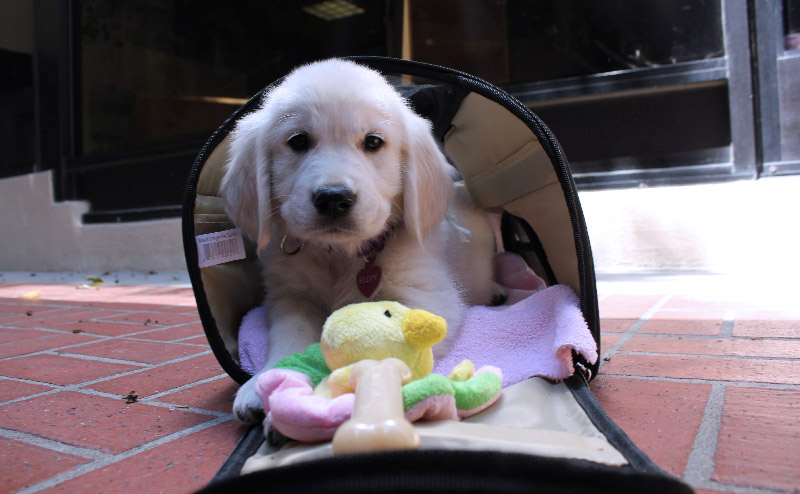 pet carrier puppy
