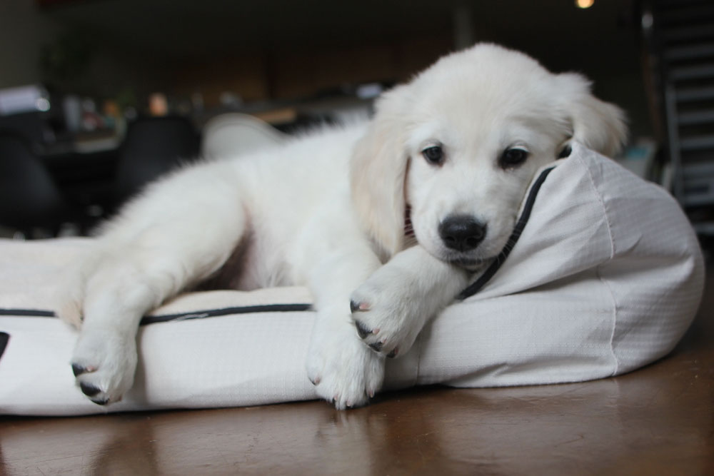 cute puppy on bed
