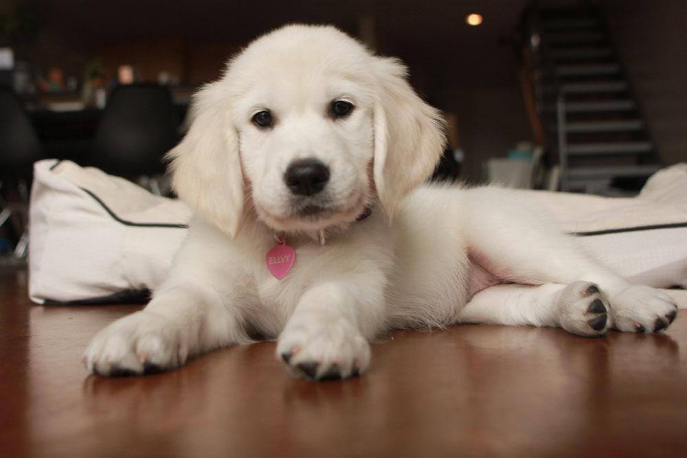 cutest puppy kong bed