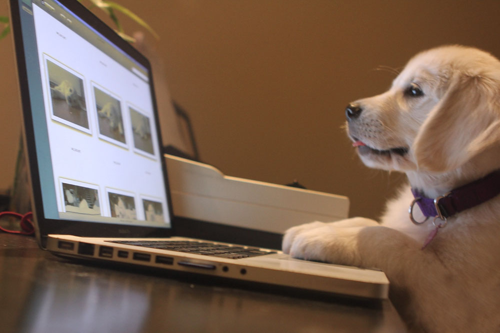 puppy using computer