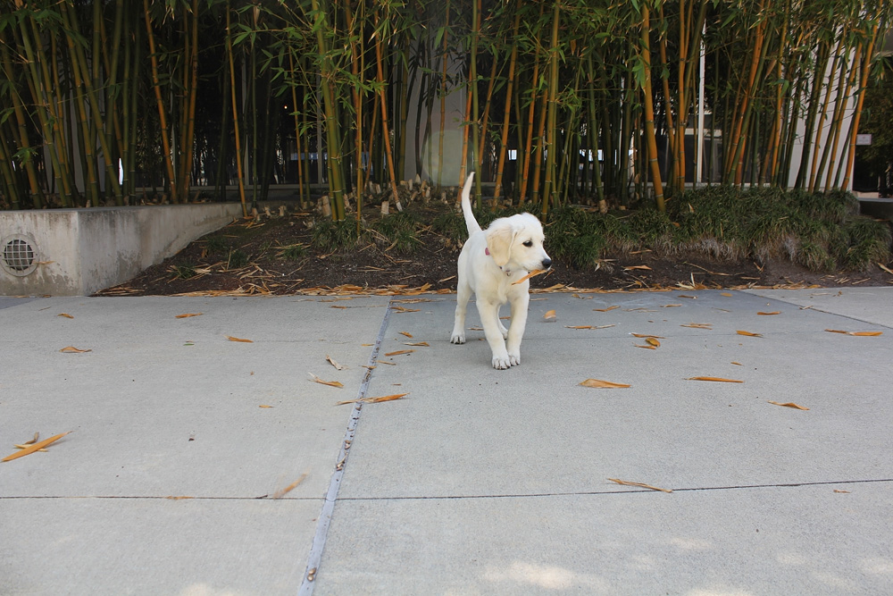 puppies chase leaves