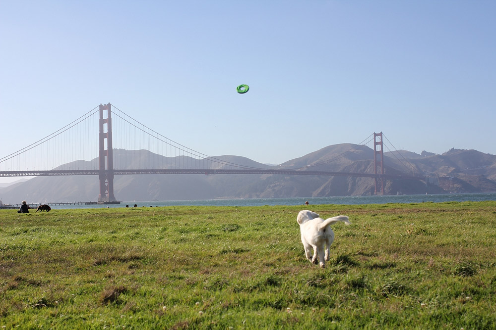 Fetch by the Golden Gate Bridge