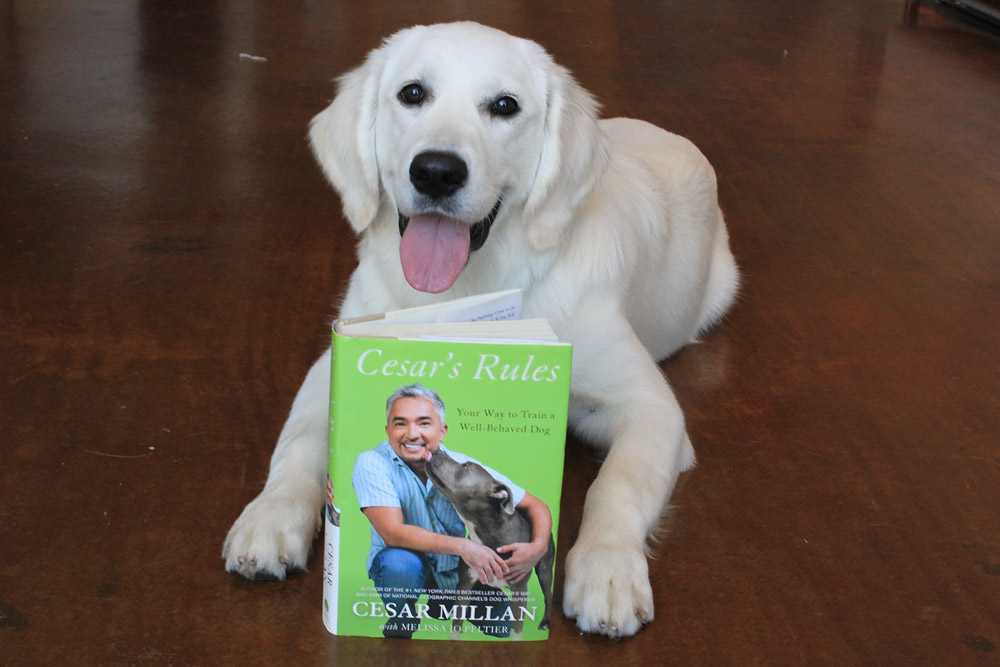 Puppy's favorite book Caesar's Rules