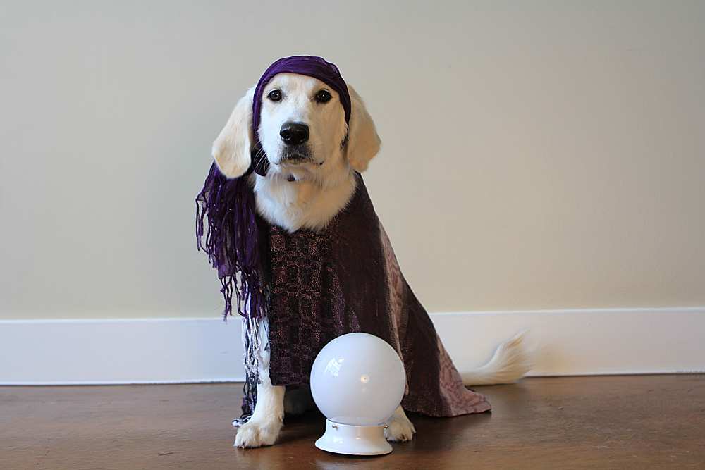 Dog fortune teller gypsy costume