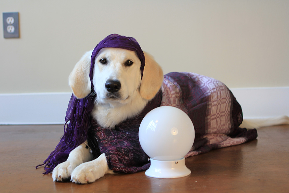 Dog fortune teller home made costume