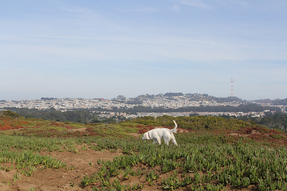 Cute dogs at Fort Funston