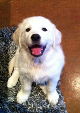 White puppy smiles
